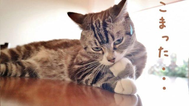 困った猫アイキャッチ